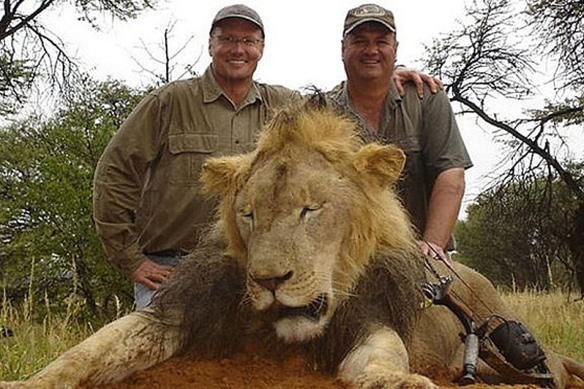 Walter J. Palmer (left) with Cecil the Lion. (man at right is unidentified)
